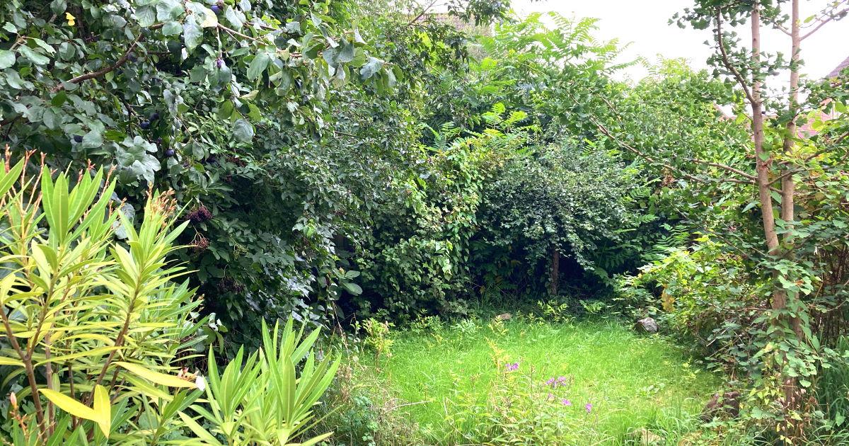 6 magische lessen uit de tuin